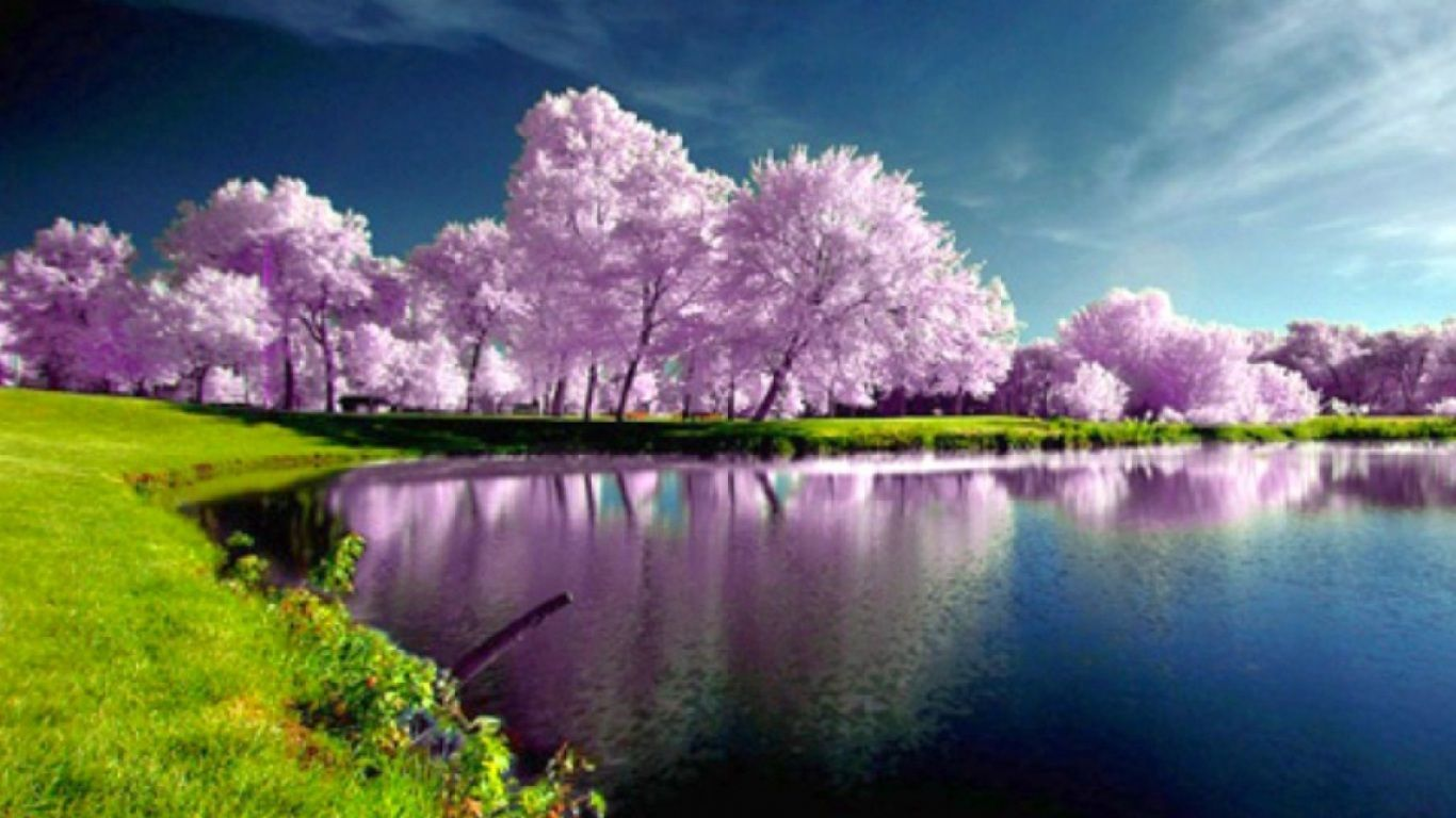 Tired of winter? Get ready for spring with these  HD wallpapers 1366x768
