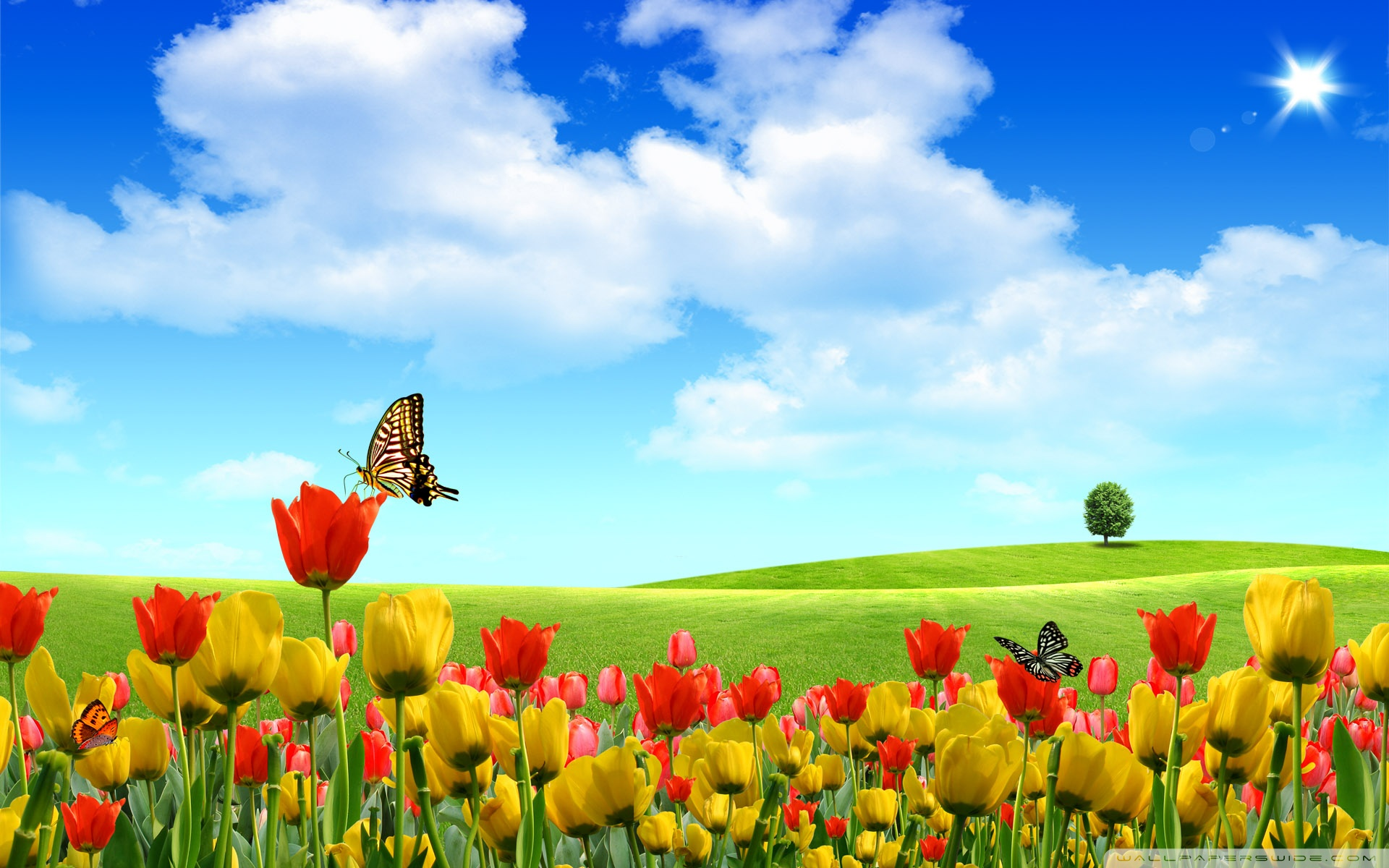 HD Spring Wallpapers For Desktop  Wallpaper  1920x1200