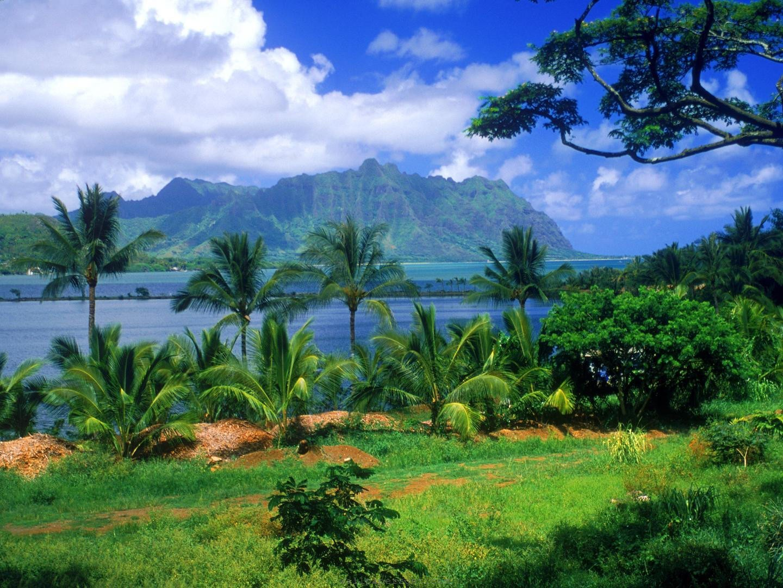 Pics For E Hd Desktop Wallpaper Nature Summer Beautiful Nature 1440x1080
