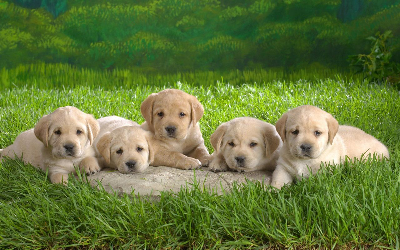Dogs Puppies Kittens Wallpaper High Quality Wallpapers 1280x800