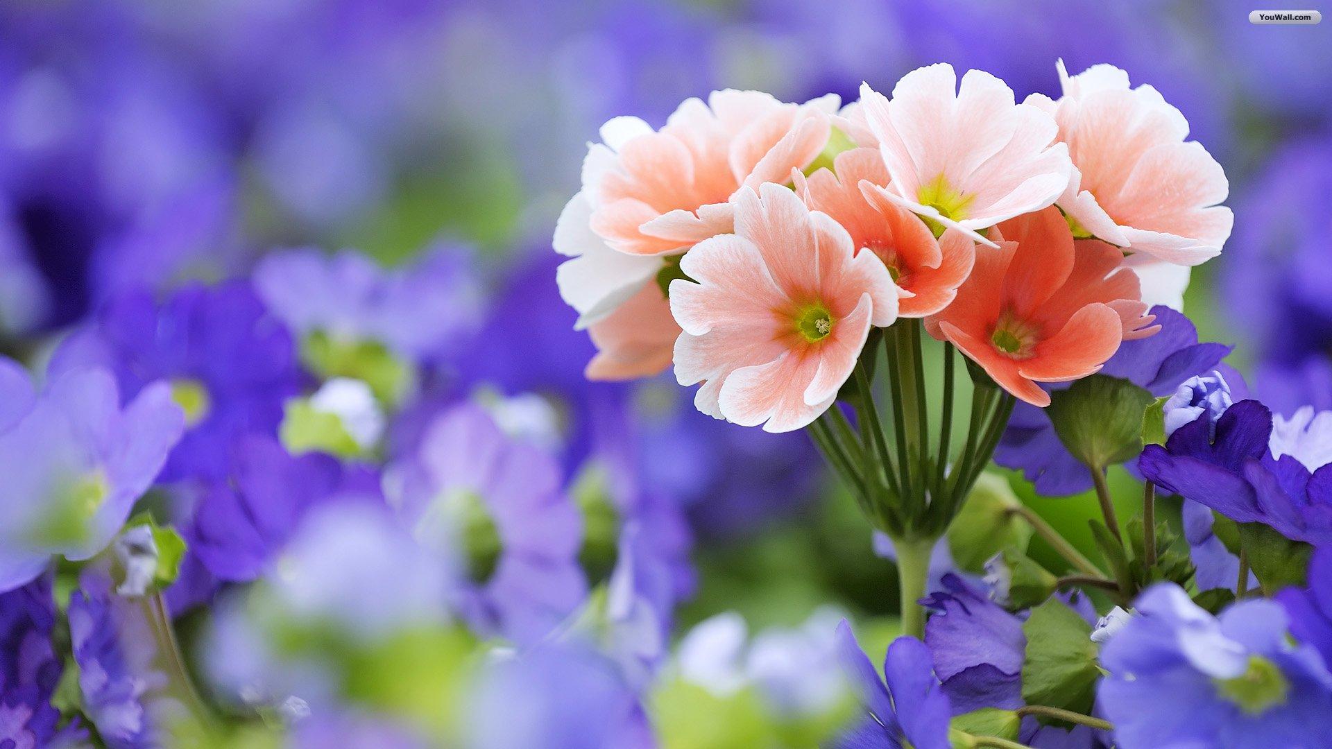 Wonderful Wallpapers Of Beautiful Flowers (55 Wallpapers)