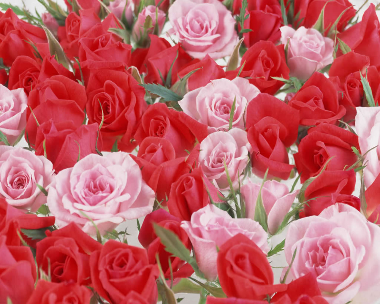Beautiful Flowers Wallpaper Quality Hd Beautiful Flowers 1280x1024