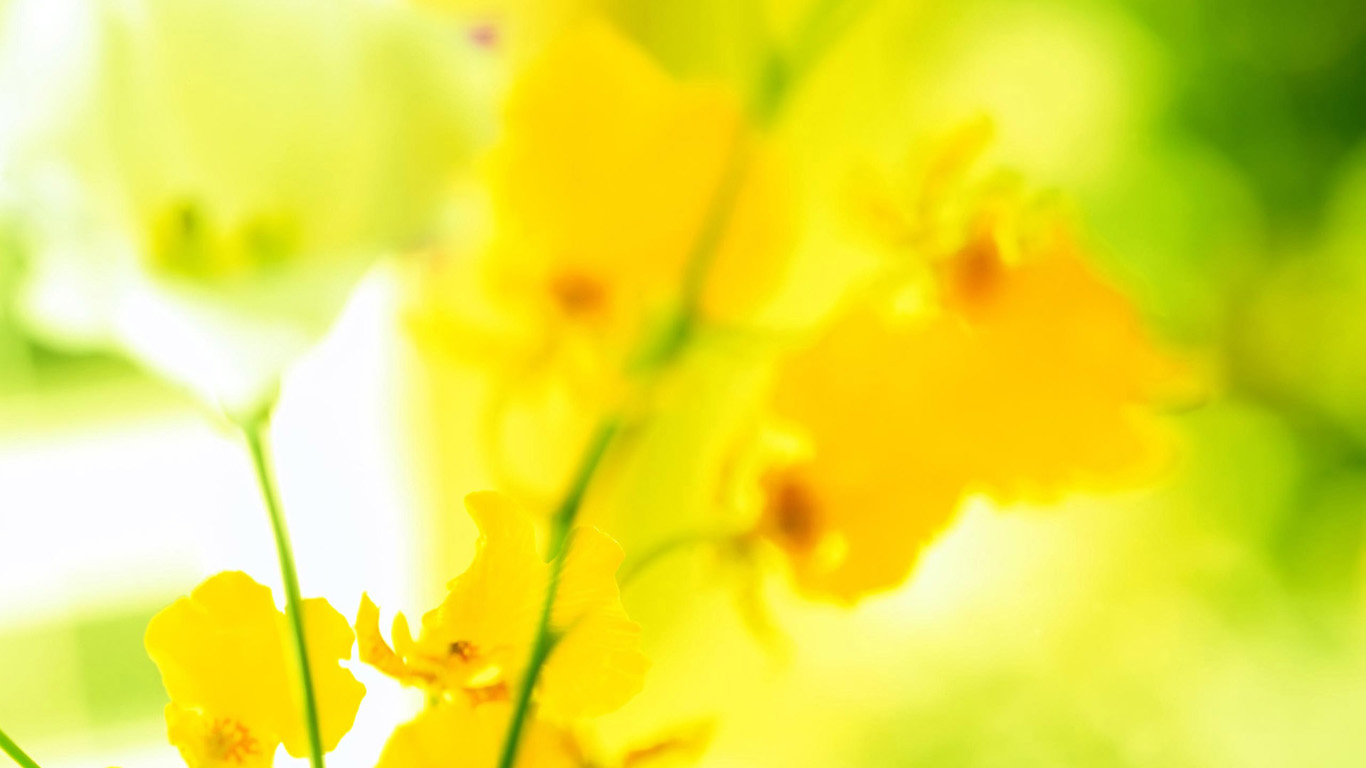 Yellow Flowers Wallpapers Download High Res Wallpaper Download
