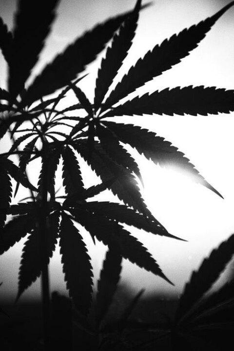 Weed Wallpaper Iphone o