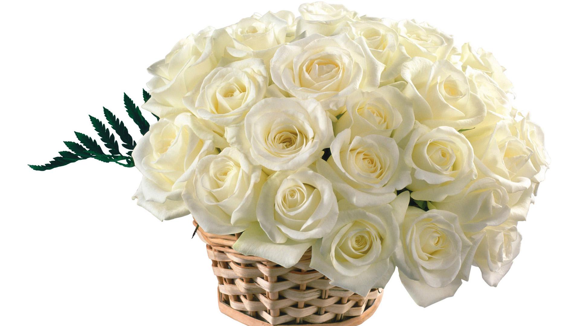 White Rose Wallpaper 023