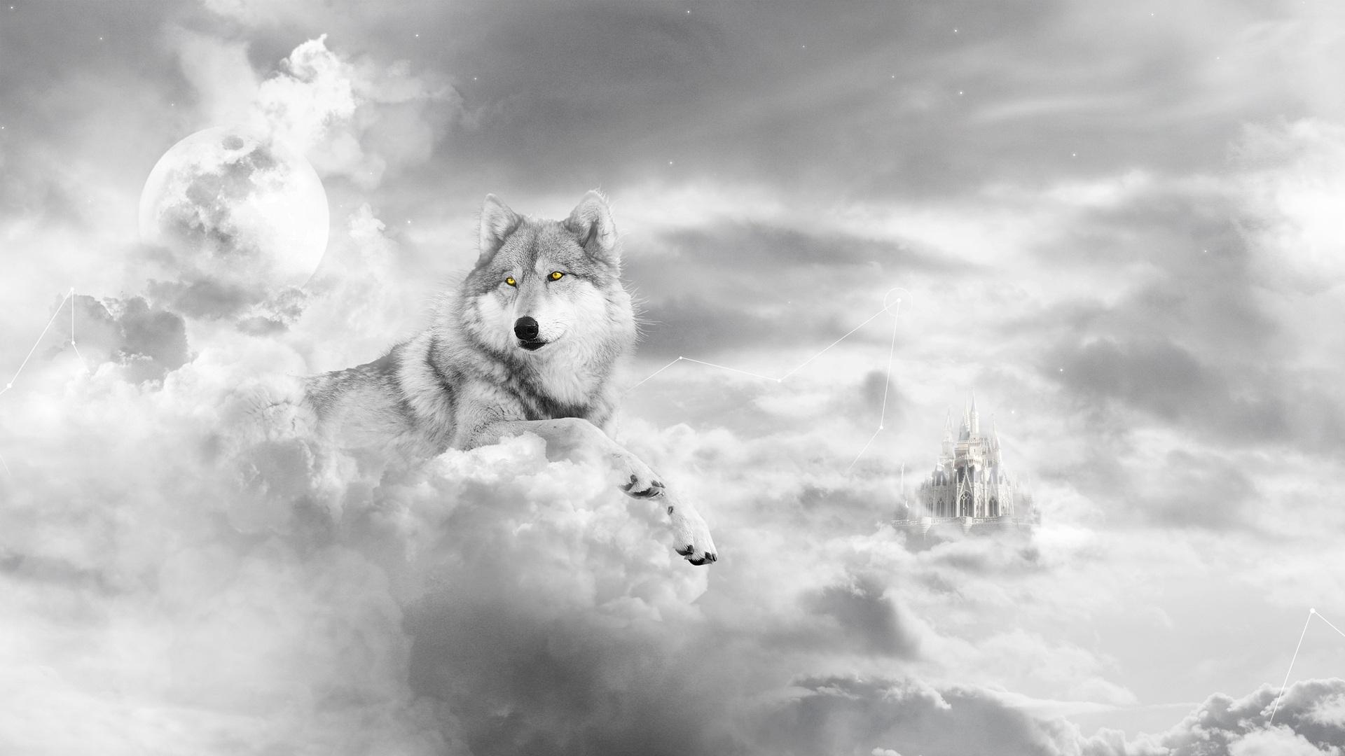Youwall White Wolf Wallpaper Wallpaper Wallpapers Free 1920x1080