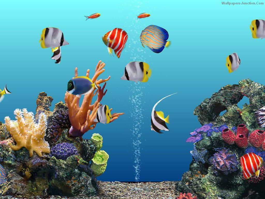 Superior ... Aquarium Wallpapers Free Wallpapers To Download ...