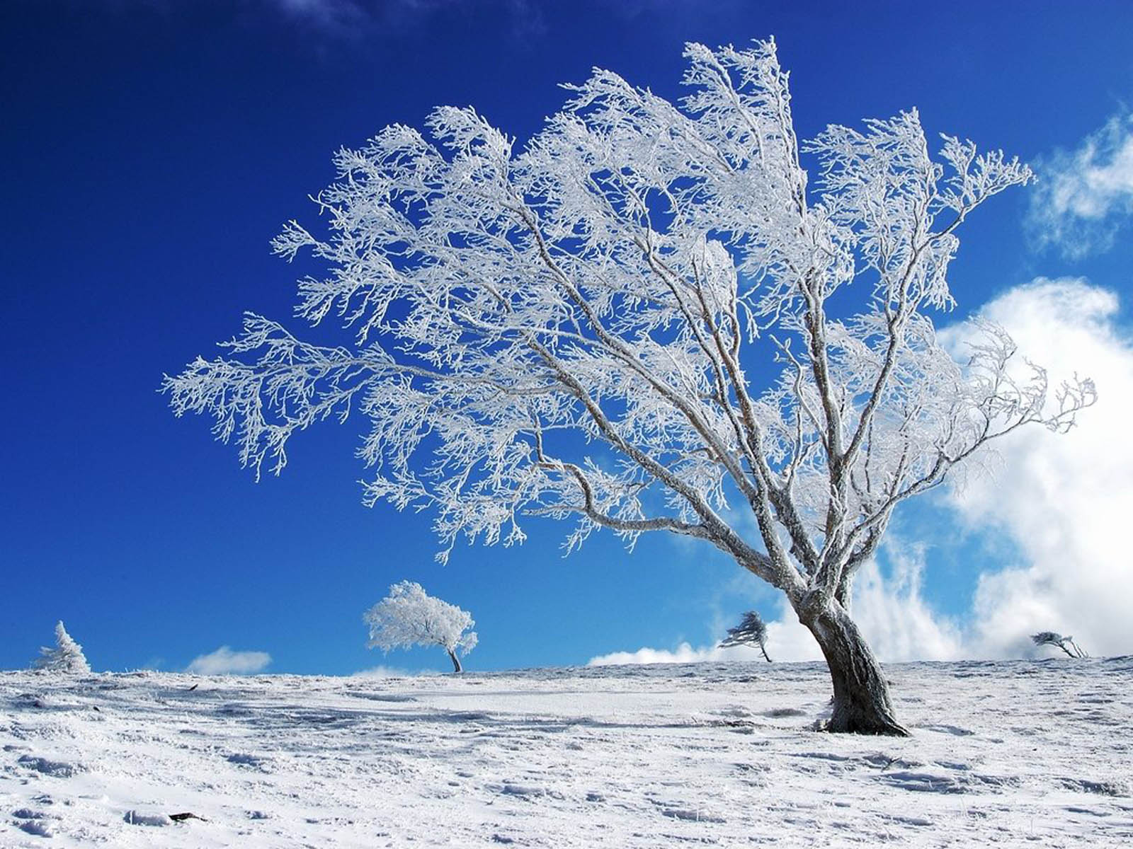 Winter Backgrounds For Desktop 51 Wallpapers – Adorable Wallpapers