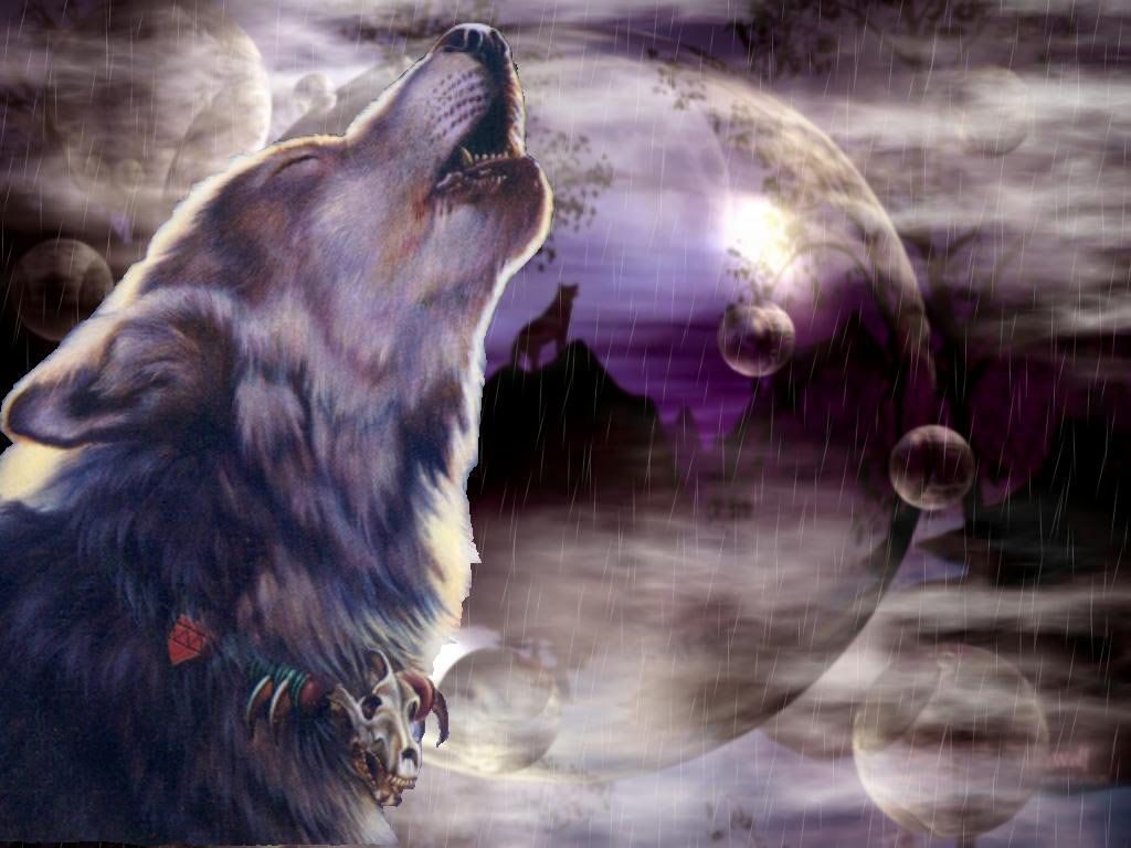 Wolf Backgrounds, Wallpapers, Images  Design Trends 1024x768