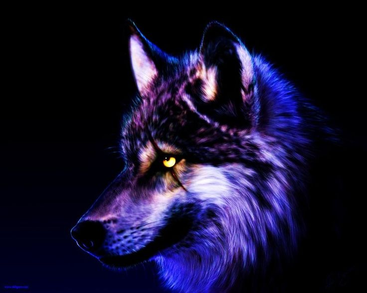 Wolf Wallpapers Free Download (58 Wallpapers)