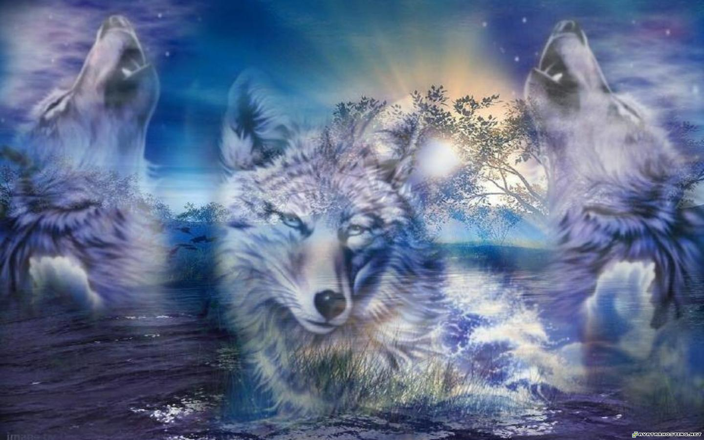 Wolf HD Wallpapers  Backgrounds  Wallpaper  1440x900