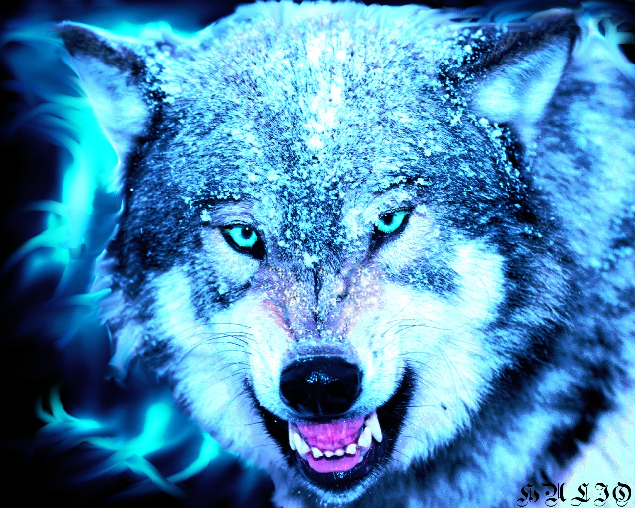 Wolves Wallpaper Collection  1280x1024