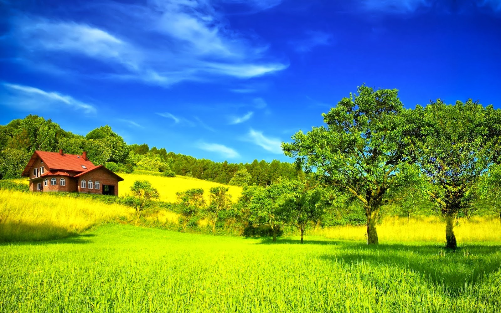 Most Beautiful Green Nature Wallpapers In The World Hd Wallpaper