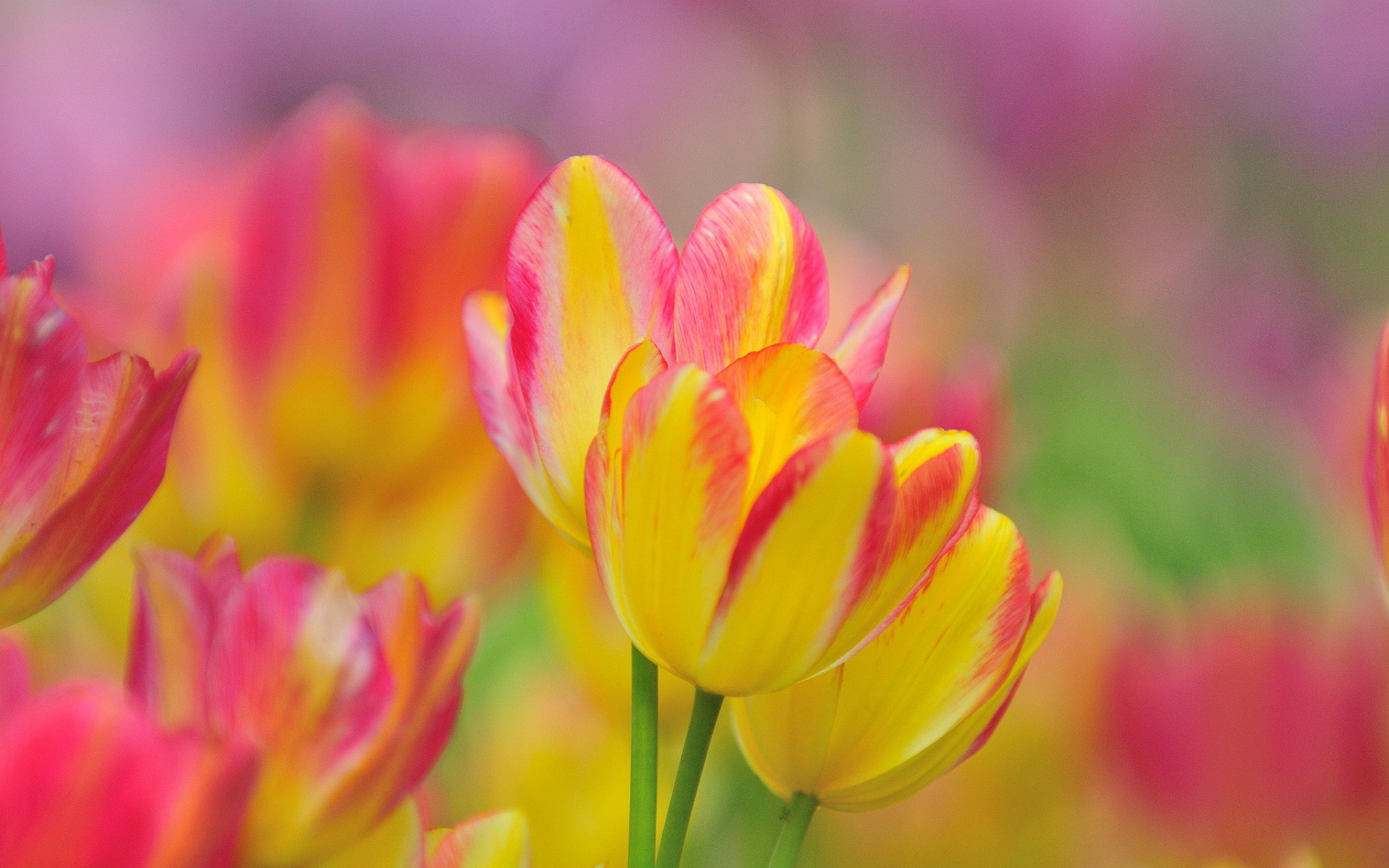 Yellow And Pink Wallpapers (35 Wallpapers) – Adorable ...