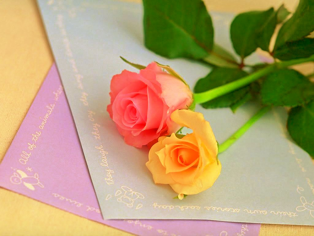 Yellow And Pink Wallpapers 35 Wallpapers Adorable Wallpapers