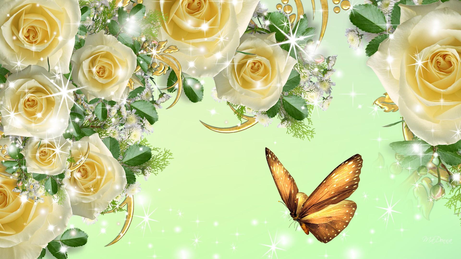 Beautiful Yellow Rose Wallpaper Images Free Download 1920x1080