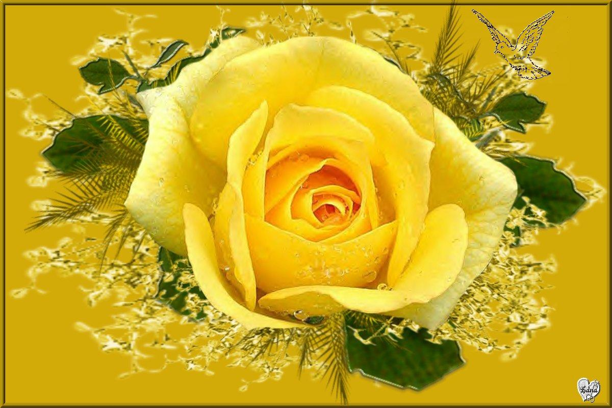 Yellow rose image wallpapers 55 wallpapers adorable wallpapers dhlflorist Image collections
